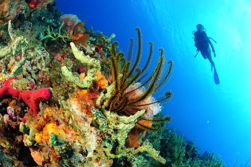 Plongée Martinique