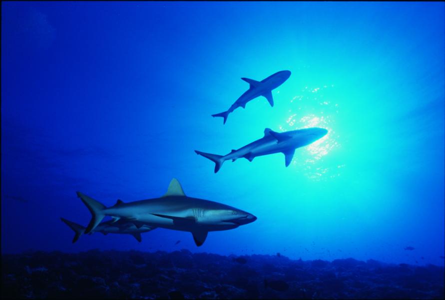 Plongée Polynésie